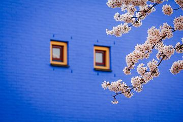 Blütenbäume im Regenbogenviertel von Almere, japanische Sakura in den Niederlanden von Evelien Lodewijks