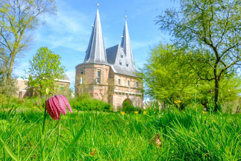 Kievitsbloem in het stadspark van Kampen voor  de Cellebroederspoort van Sjoerd van der Wal