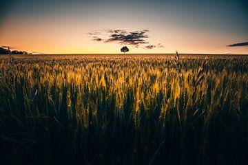 Eenzame boom in het veld. van Fotos by Jan Wehnert