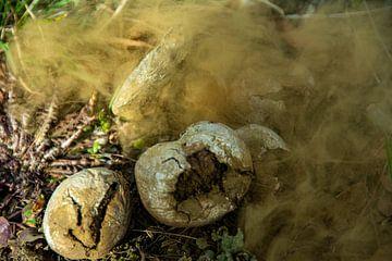 Landschaft im Erzgebirge Pilz von Johnny Flash
