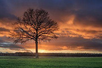 Ländliche Landschaft mit Baum in einem Feld und roten sunset_1 von Tony Vingerhoets