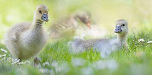 Jong leven in het voorjaar