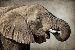 Afrikanischer Elefant van Angela Dölling