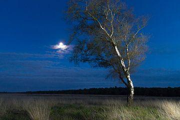De heide bij nacht van Kim Dalmeijer
