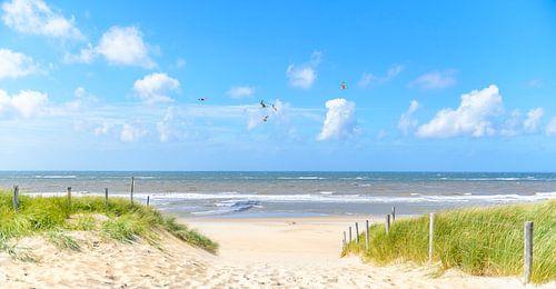 Pad in de duinen naar de zee in de zomer