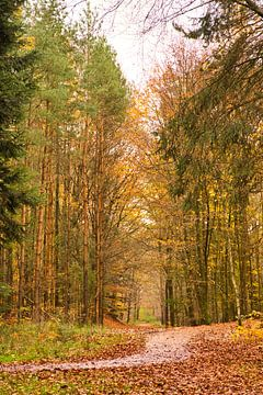 Herbst von Irene Doorten