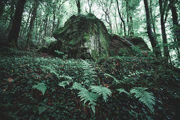 Varens in het bos van Niels Eric Fotografie