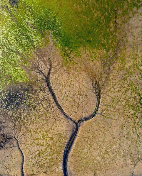 Tree of life Texel van Texel360Fotografie Richard Heerschap