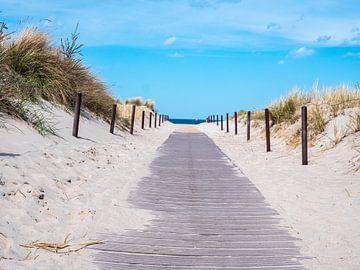 Strandpad aan de Oostzee in Kühlungsborn van Animaflora PicsStock