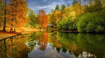 Park Wandelbos in Tilburg tijdens de herfst van Dennis Donders