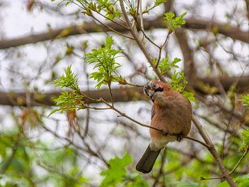 Vogel im Baum von Hannon Queiroz