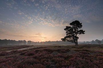 Zonsopkomst bij de eenzame boom, Zeist Heidestein Utrechtse heuvelrug! van Peter Haastrecht, van