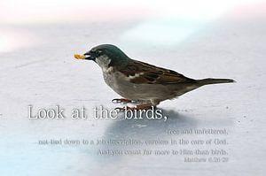 Look at the birds (Quotes) van