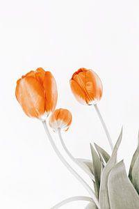 drie tulpen van Michael Schulz-Dostal