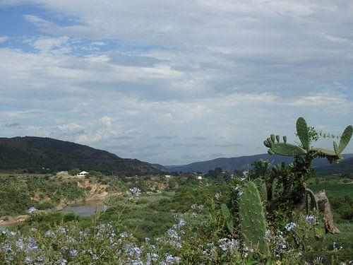 Uitzicht met bloemen en cactus