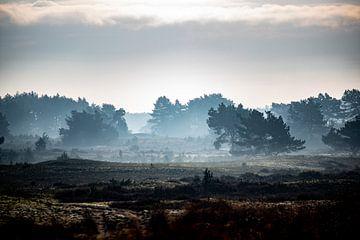 Nebel auf der Veluwe von Wytze Kiers