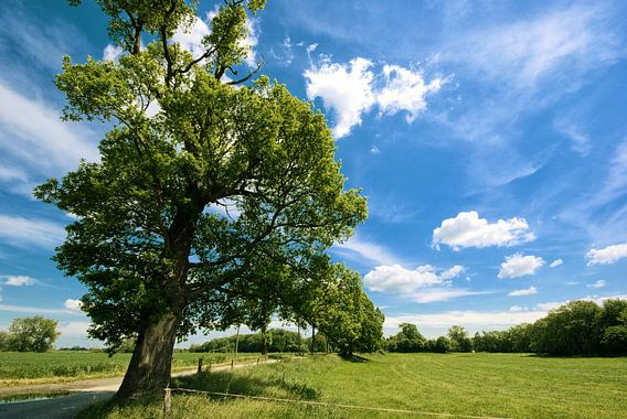 Tree and a blue sky.