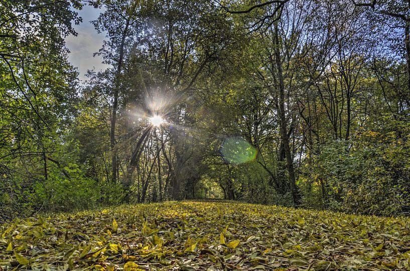 Herfst in Zestienhoven van Frans Blok