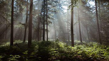 OP EEN DROMERIGE ZOMERDAG van Algon Photography