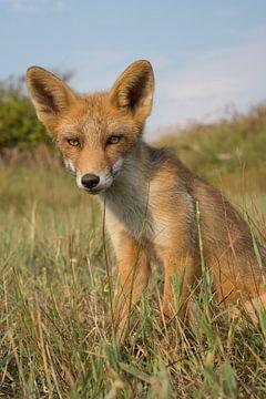 Portret van een jonge vos van Yvonne van der Meij