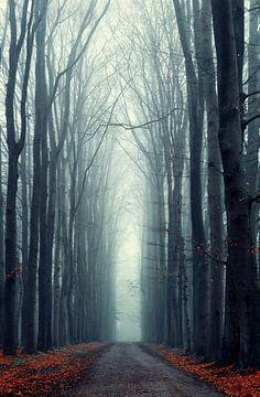 Misty Lane van