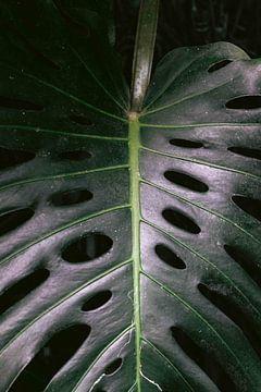 Tropische Blätter im botanischen Garten von Simone Neeling