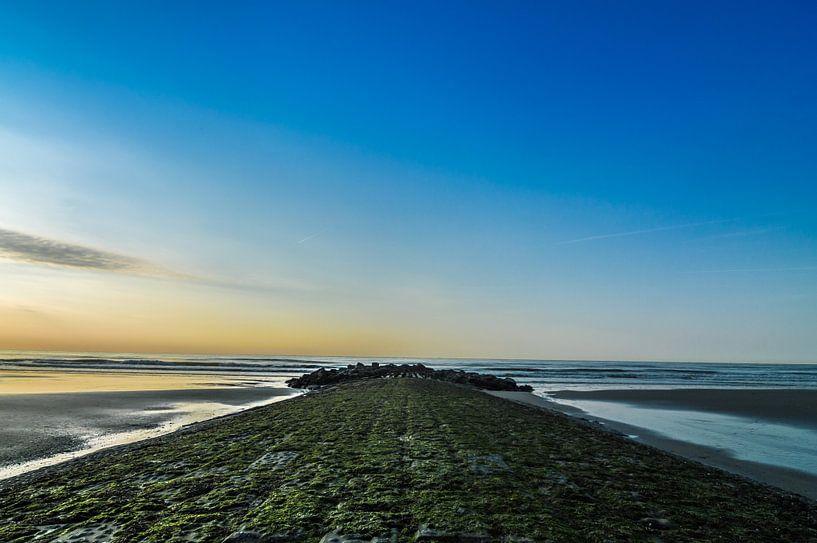 Zeekribbe bij Bredene van Patrick Verhoef