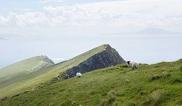 Schafe am Rande der Welt von Nathan Marcusse