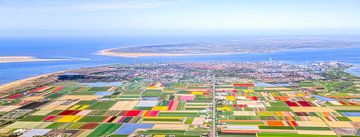 Panorama-Blumenzwiebeln Texel und Nordholland von Robert Riewald