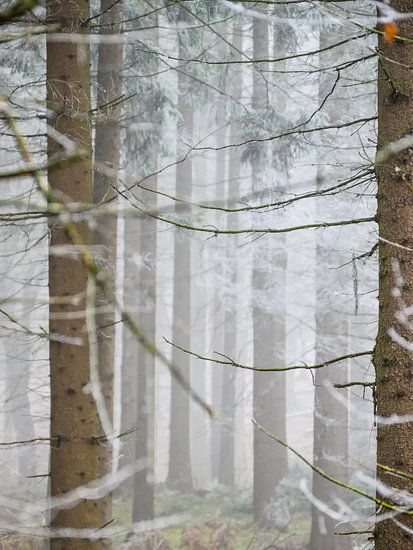 Trees with fog and frost