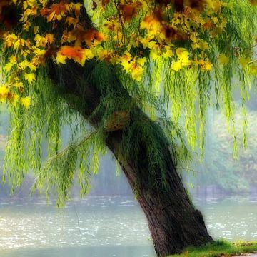 autumn tree special van Bernd Hoyen