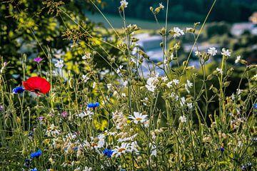 bos bloemen veld landschap Erzgebirge bergen steden dorpen van Johnny Flash