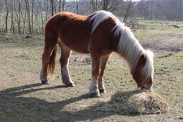 Pony bij Kuinderbos van Jan Sloothaak