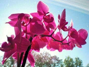Paarse orchideeën van Pictures Of Nature