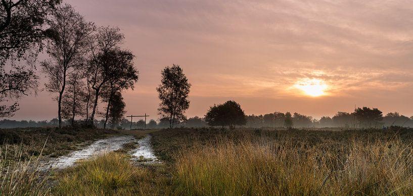 Follow the path van Steven Groothuismink
