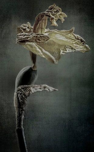 Faded glory von Marlies Prieckaerts