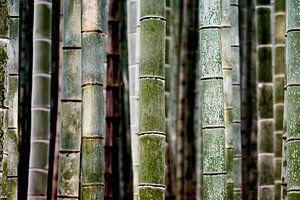 Bamboe stammen van