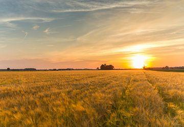 Kornfeld bei Sonnenuntergang von Marcel Kerdijk