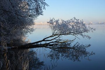 Baum von Corinna Vollertsen