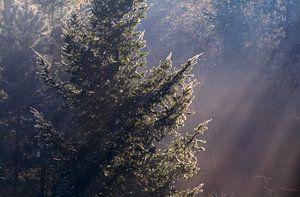 Light fall
