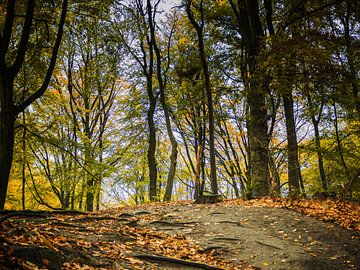 Autumn forrest am Teufelsberg von Lex Schulte