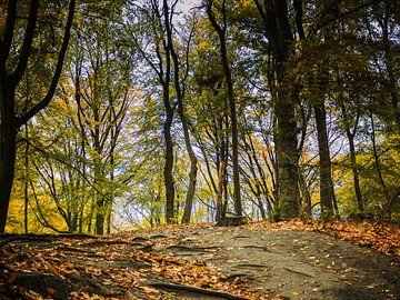 Autumn forrest van