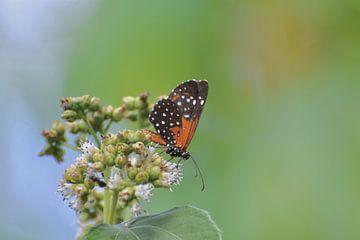 Schmetterling von Mieke Verkennis