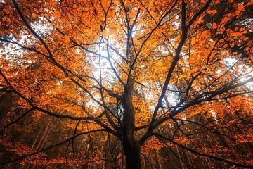 Herbst Traumzauberbaum von Oliver Henze