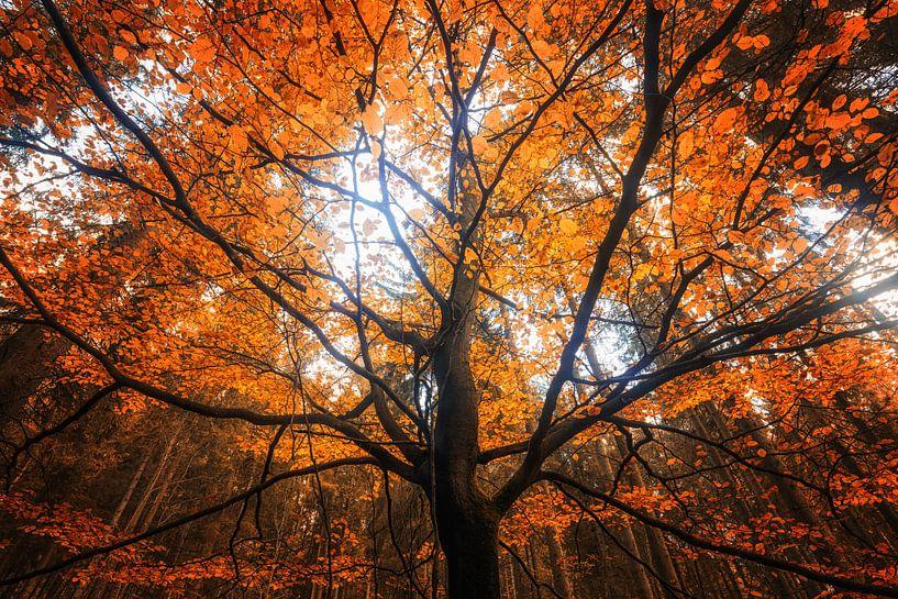 Herbst Traumzauberbaum van Oliver Henze