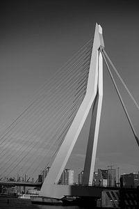 Architektur | Erasmusbrücke