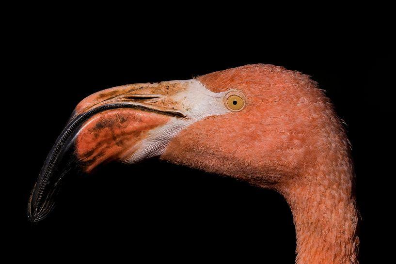 Flamingo van Eric Vink