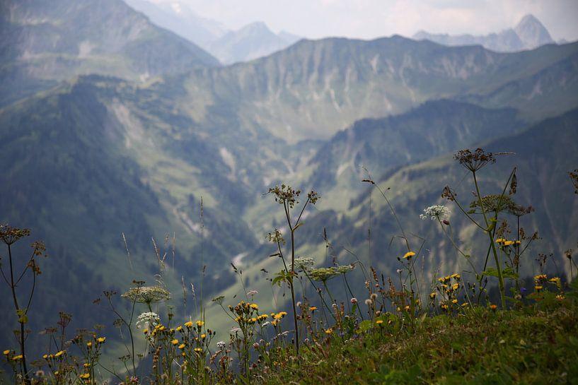 Alpine panorama with herbs van Erich Werner