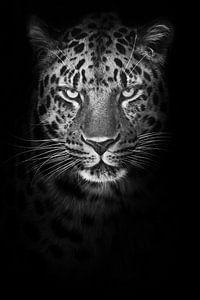 Ernstig minimalistisch portret van een besnorde koude luipaard die streng kijkt uit de nacht, zwart- van Michael Semenov