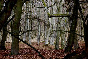 Wald im Winter von Thomas Jäger
